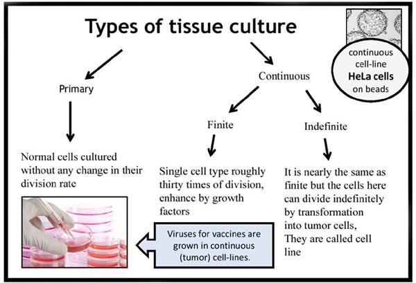 100+ Types Of Tissue Culture – yasminroohi